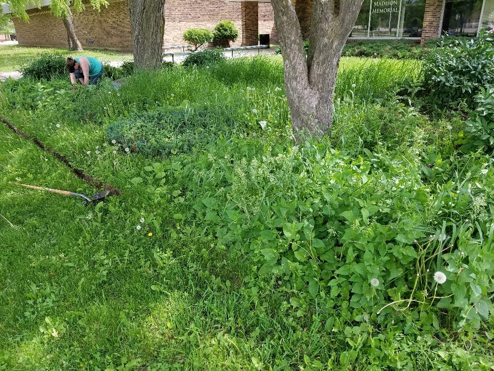 MMHD Garden before